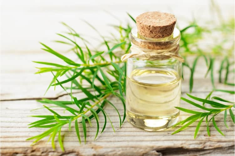 how to use tea tree oil in your skin care routine