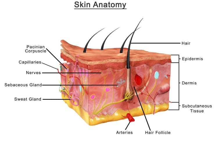 does eating healthy give you better skin