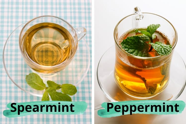 peppermint tea vs spearmint tea for acne